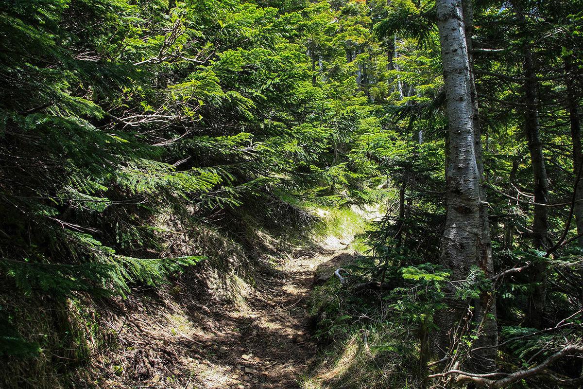 【南八ヶ岳 南北縦走】登山百景-キレット小屋からは緑の中を歩く