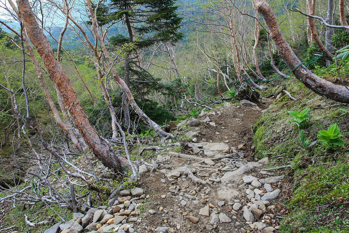 【南八ヶ岳 南北縦走】登山百景-再び樹林帯へ