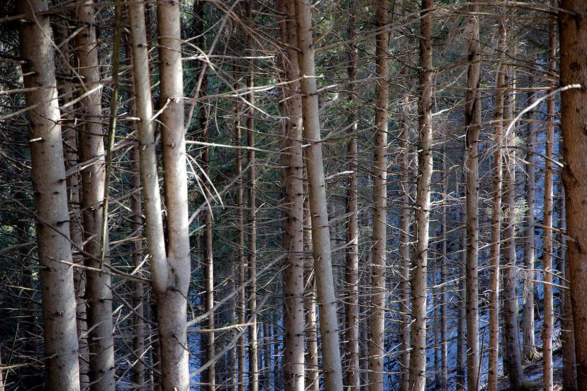 針のように木々が生えていた