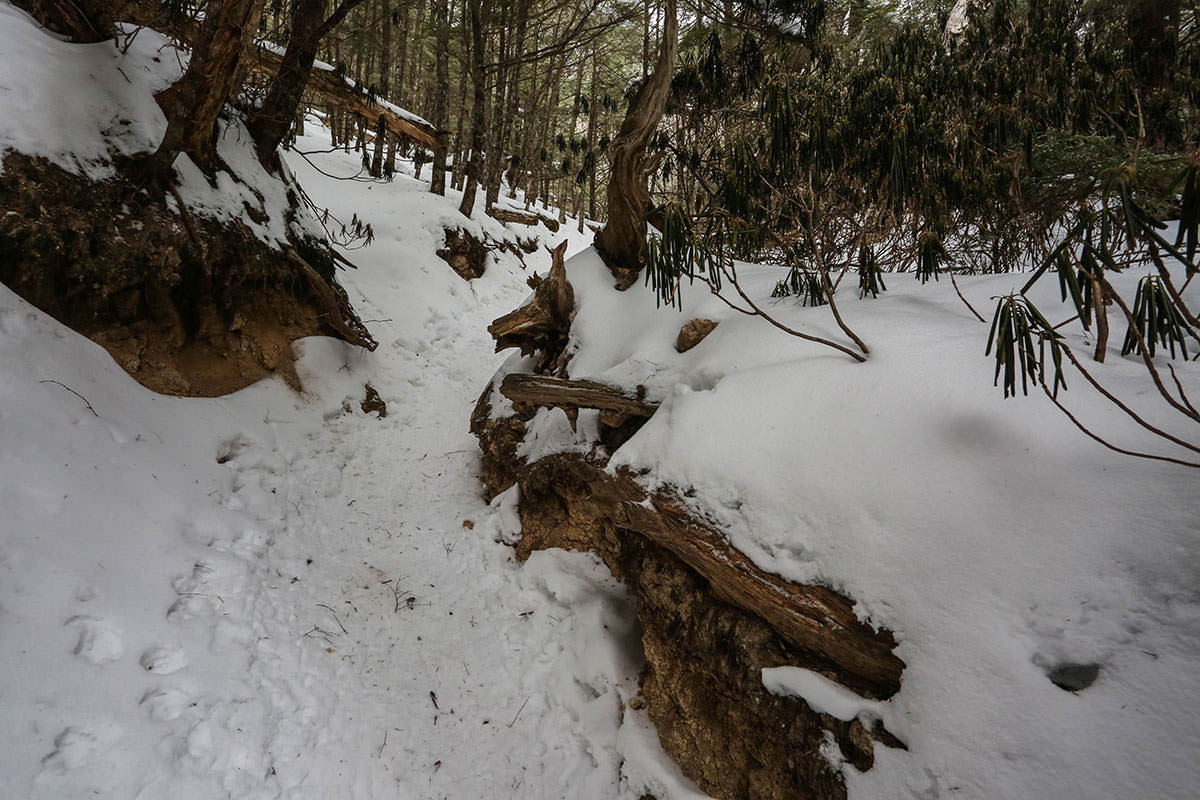 さらさらの雪の登山道