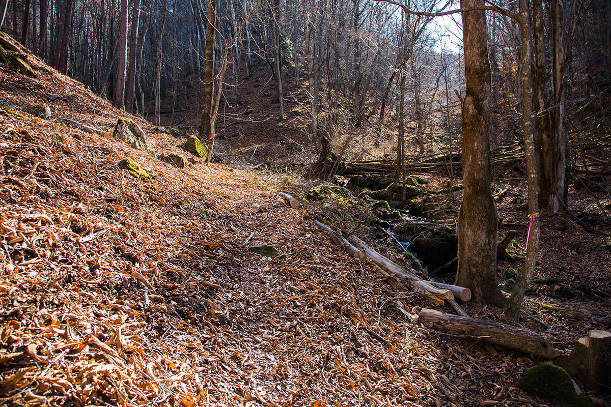 【茂来山】登山百景-谷沿いに登っていく