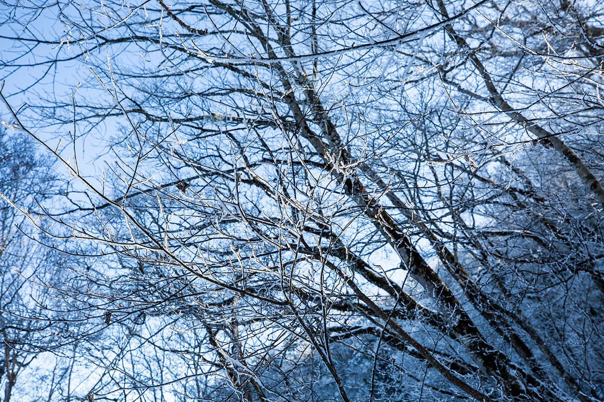 枝が凍ってる