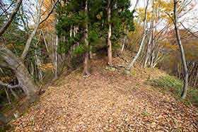 ここは真っ直ぐ杉の間を抜ける