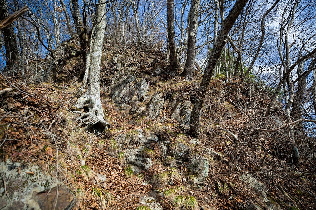 岩の上に落ち葉が積もった登山道