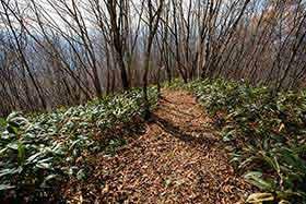 不動滝コースは笹が茂って熊が出そう