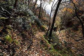 おだやかな里山歩き的な不動滝コース
