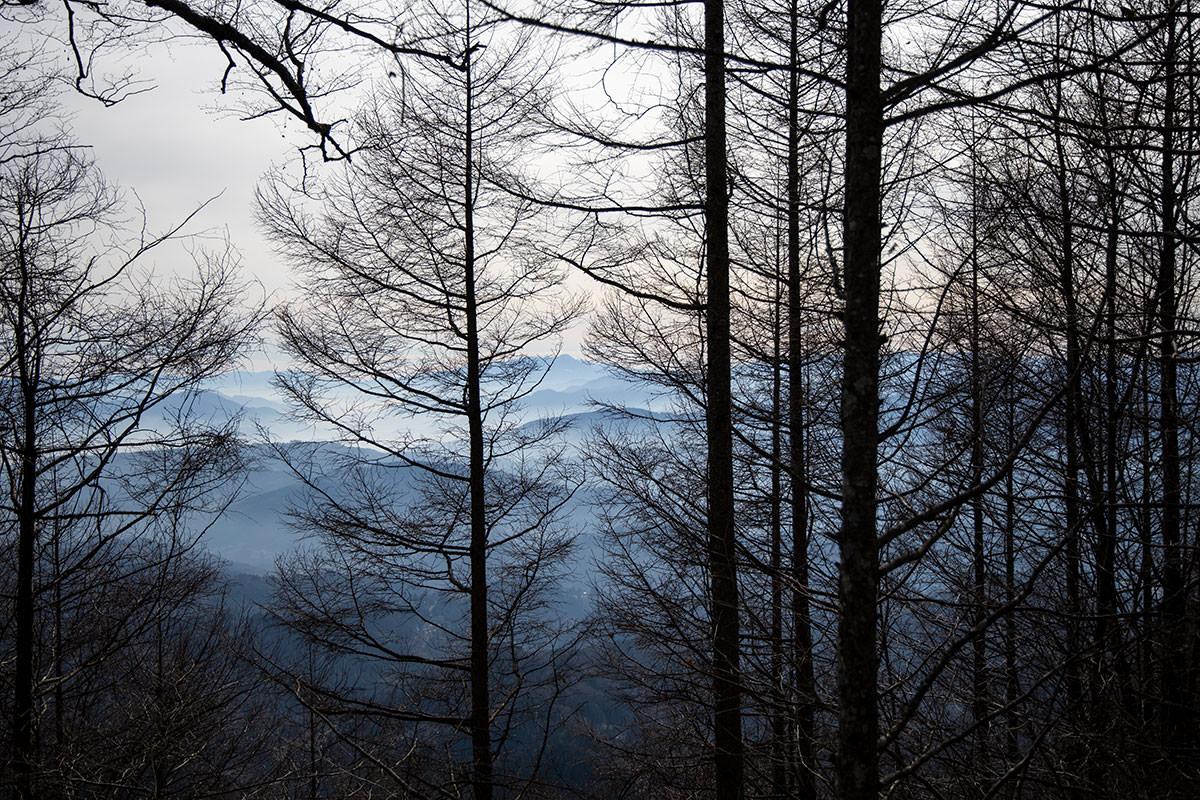 枝の間から八ヶ岳が見える