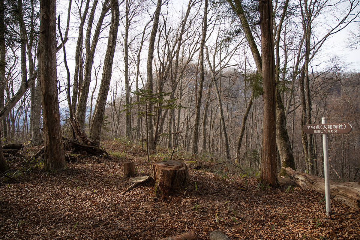 神社の反対側へ登山道が延びている
