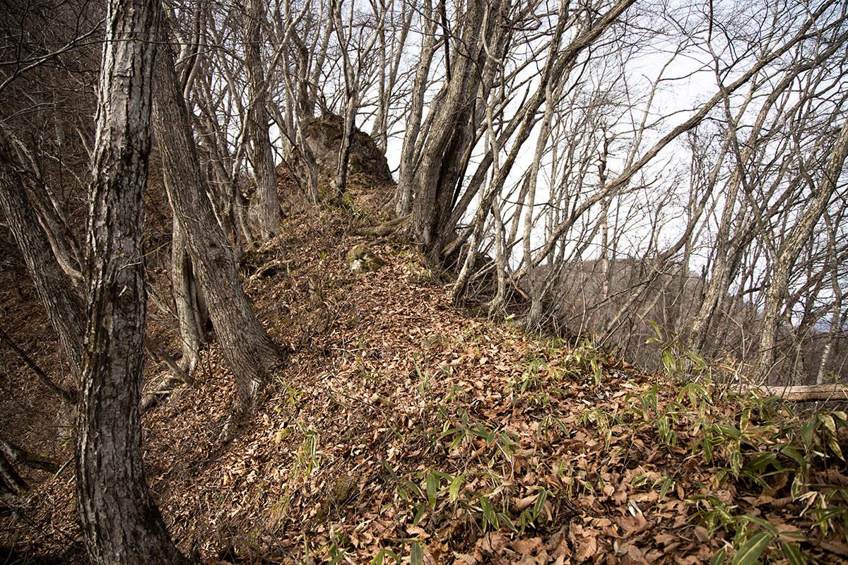 虫倉山-また登る