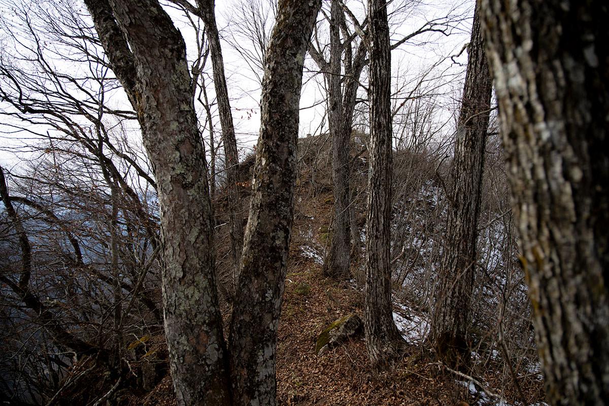 木の間に山頂が見える