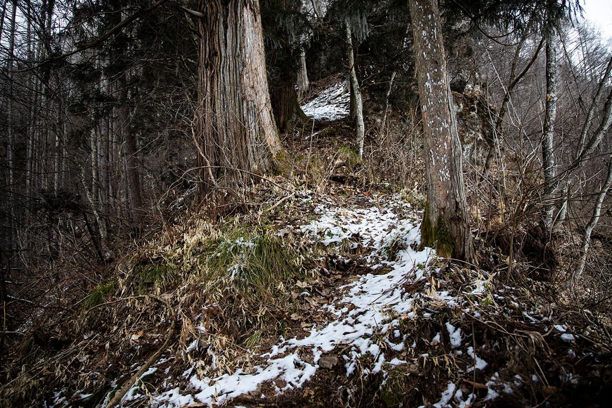 杉の間を縫って登る