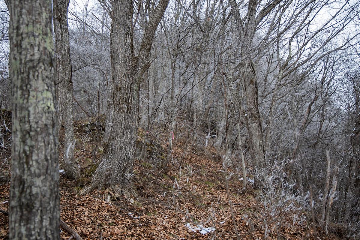 枝が凍みて白い