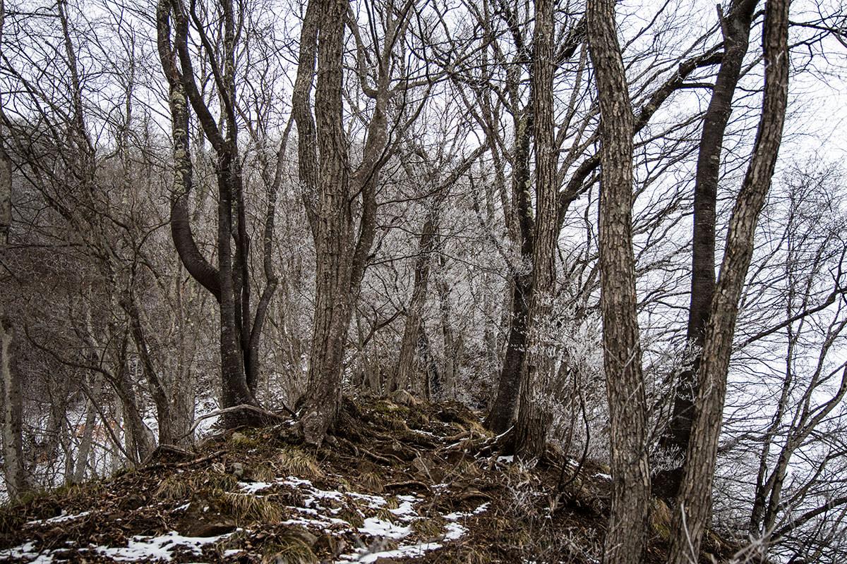 木の根がちょうど良い段差