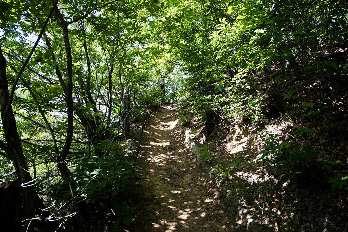 木のトンネルを潜って登っていく