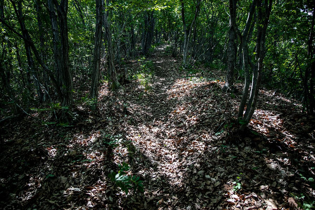落ち葉の多い急斜面が続く