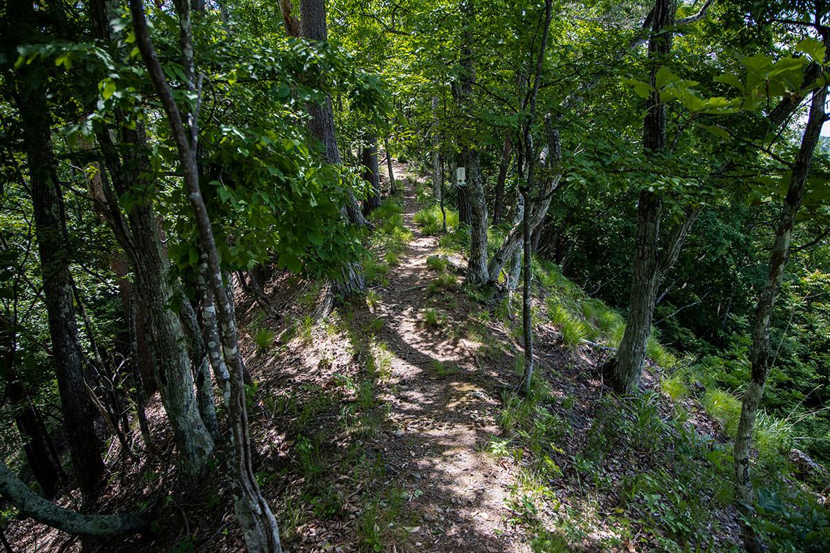 細い尾根っぽい登山道