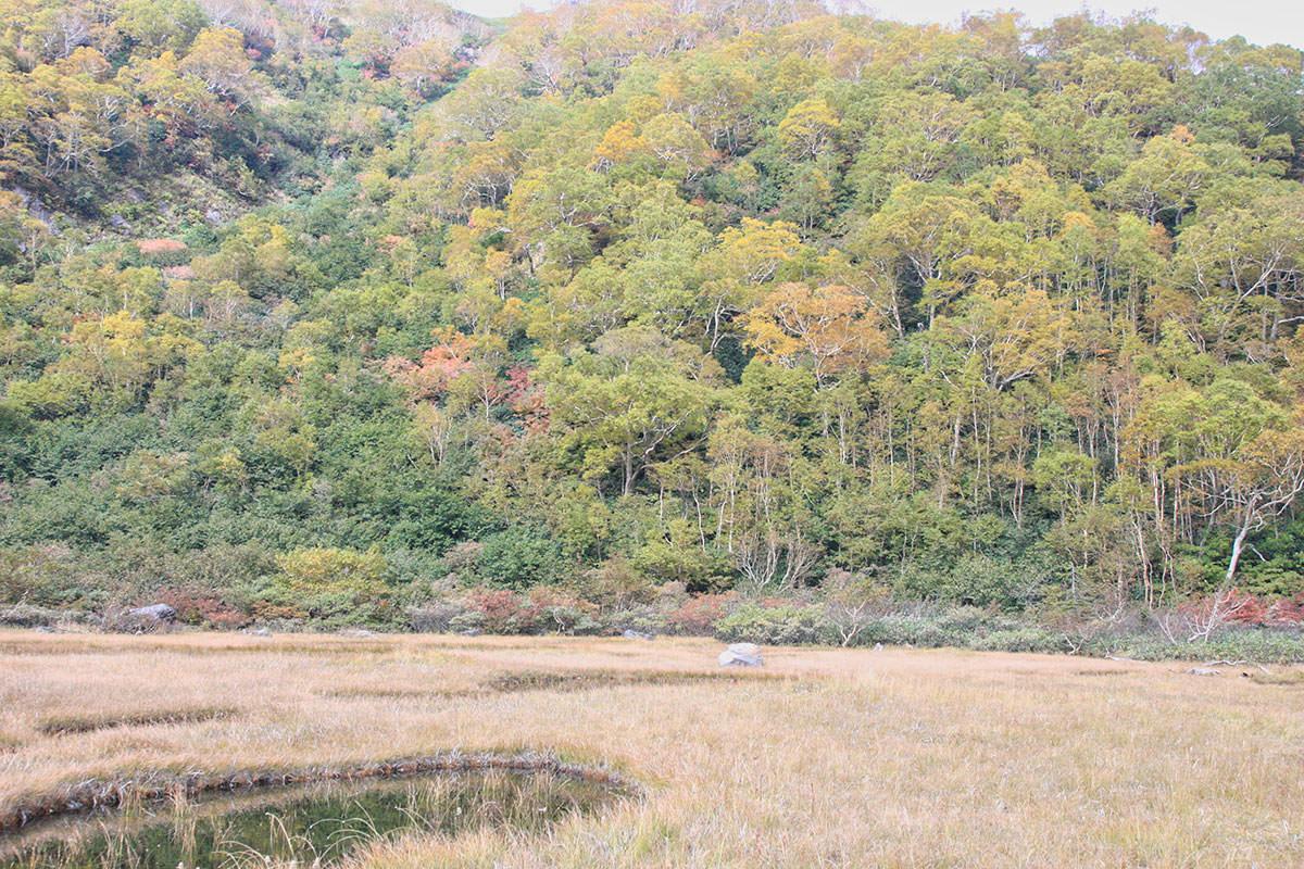 【妙高山】登山百景-池、湿地