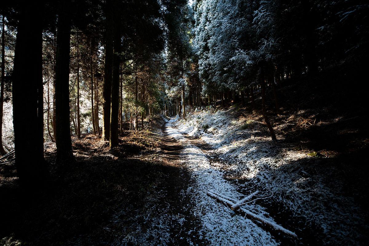 杉の間を通っていく