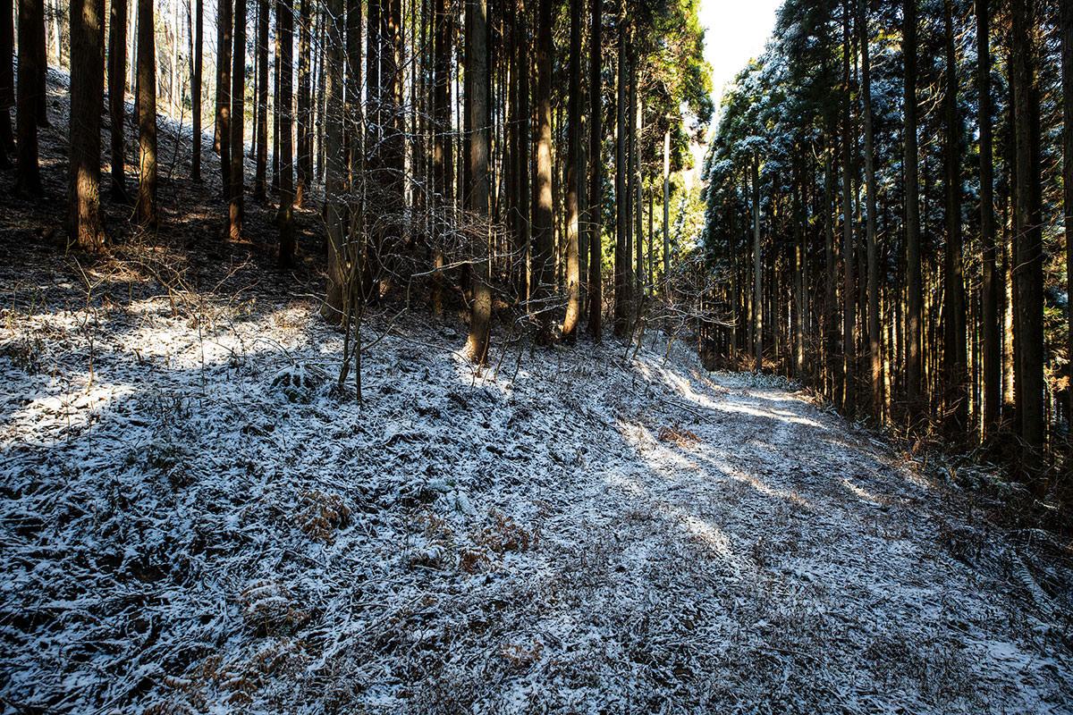 半信半疑な林道
