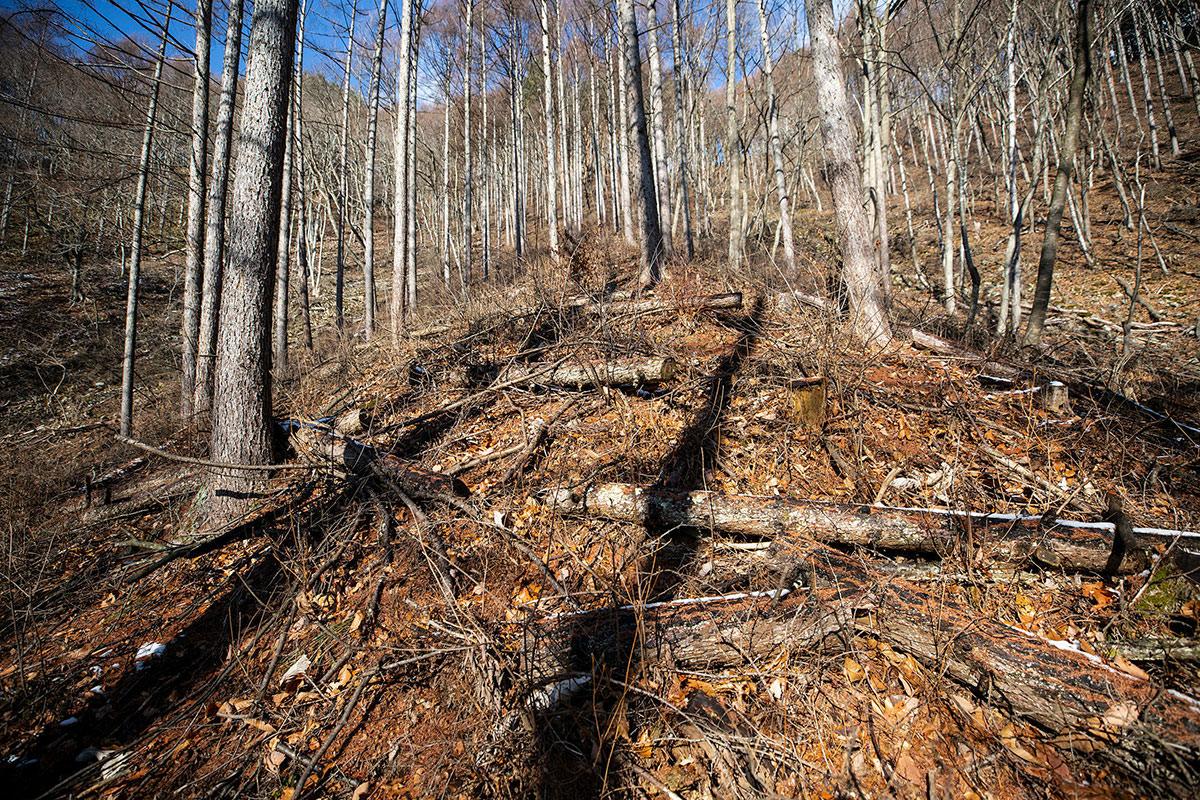 急斜面の林業の跡