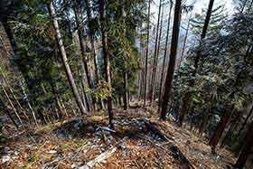 林業跡がある