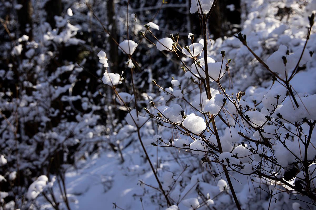 雪が玉のように付いている