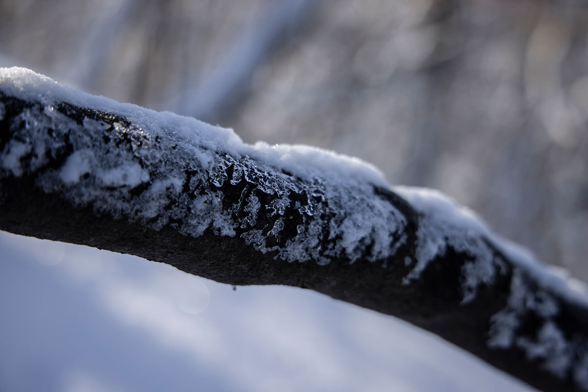 木には氷が着いている