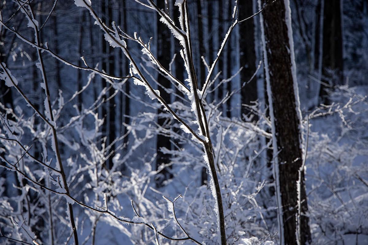 近くにある木にも氷り