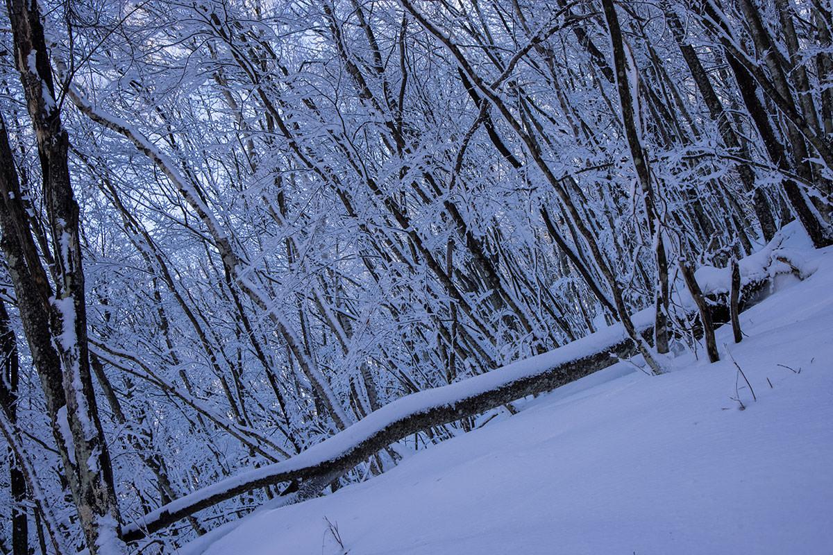 日影で霧氷で雪で寒そう