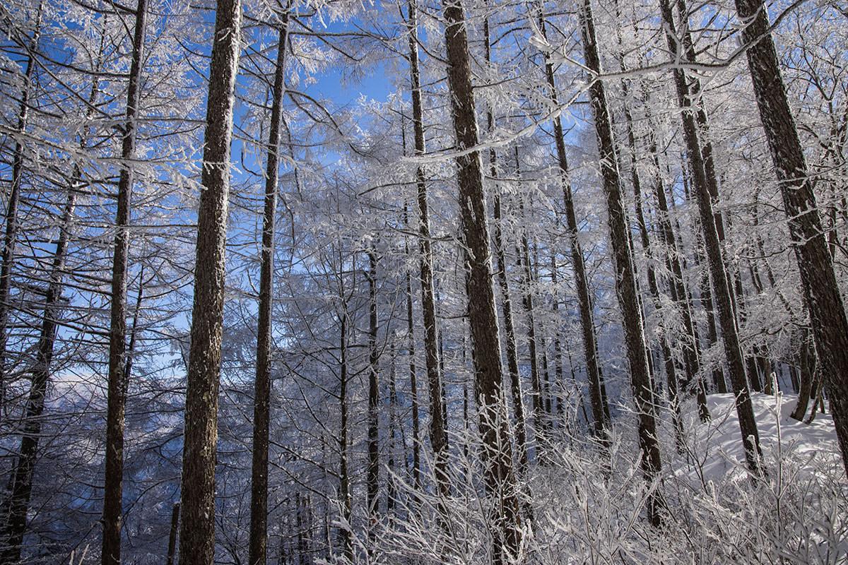 青い空と霧氷の白いのがとても良かった