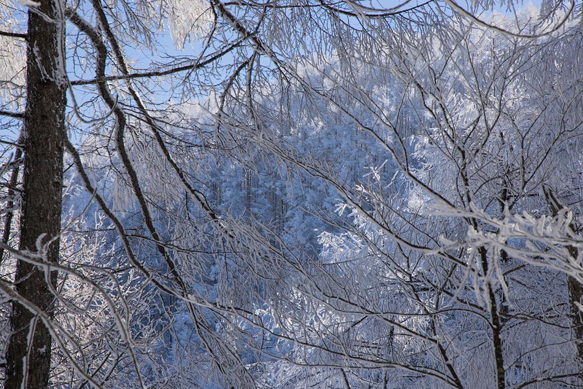 霧氷の先に見える山も霧氷