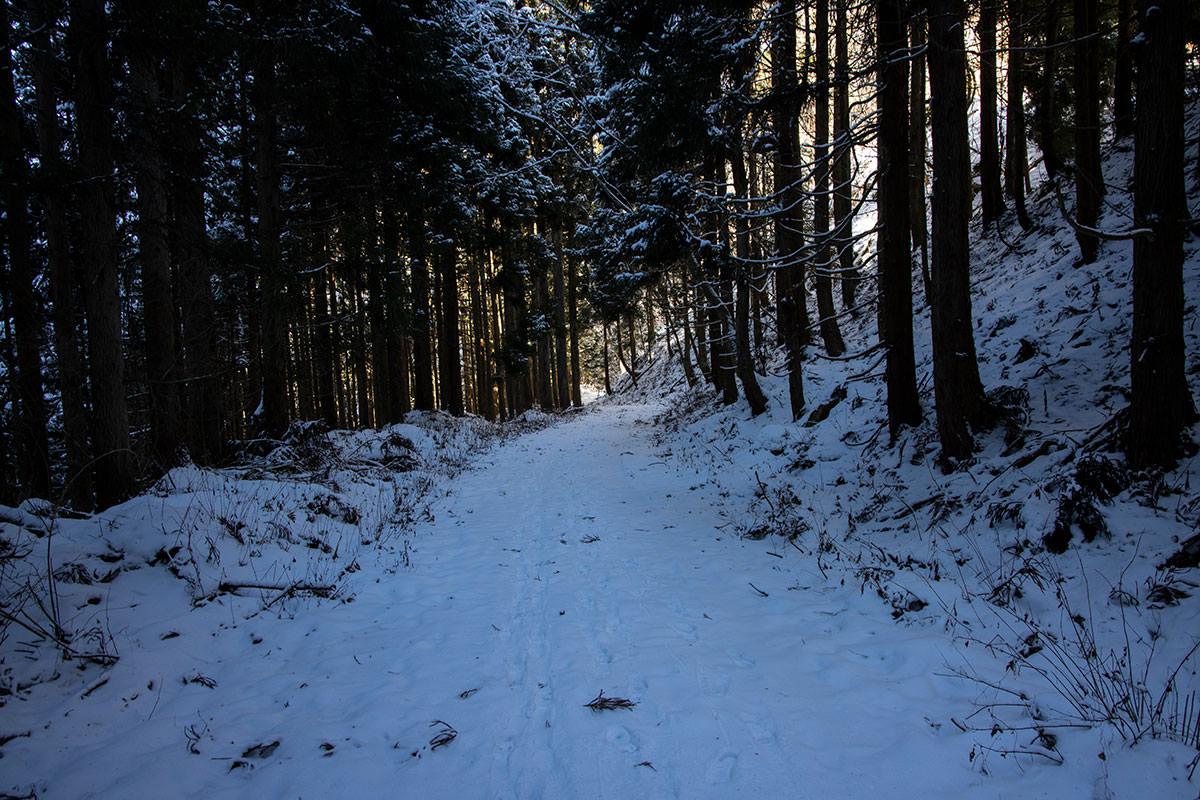 この林道がどのあたりなのか・・・