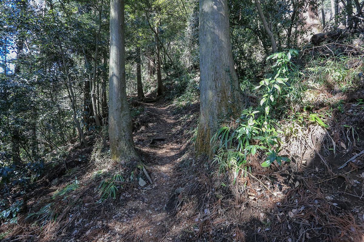 【妙義山】登山百景-木がいっぱい