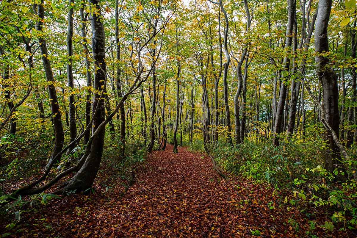 【鍋倉山】登山百景-落ち葉が絨毯のよう