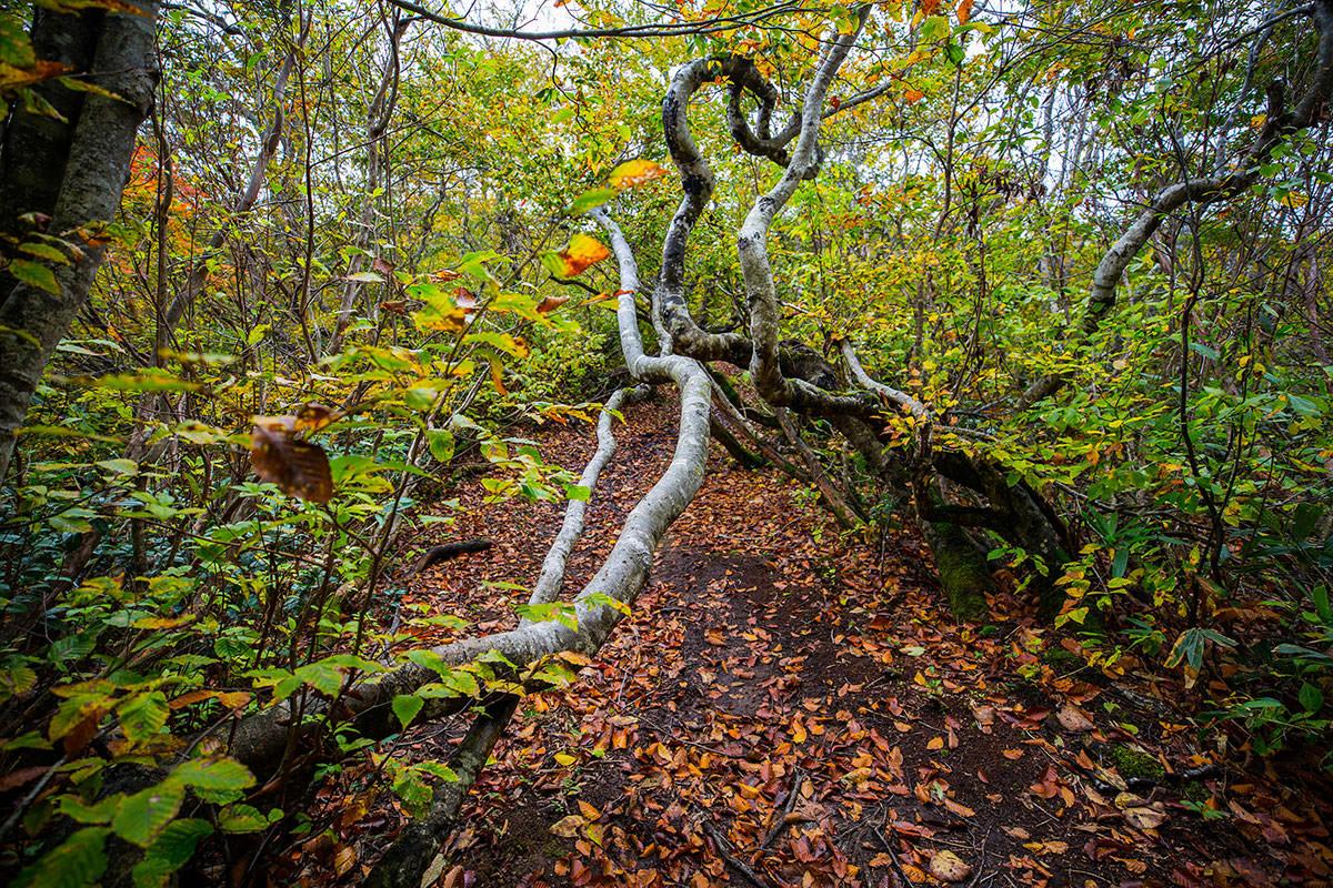 【鍋倉山】登山百景-道に覆い被さる木