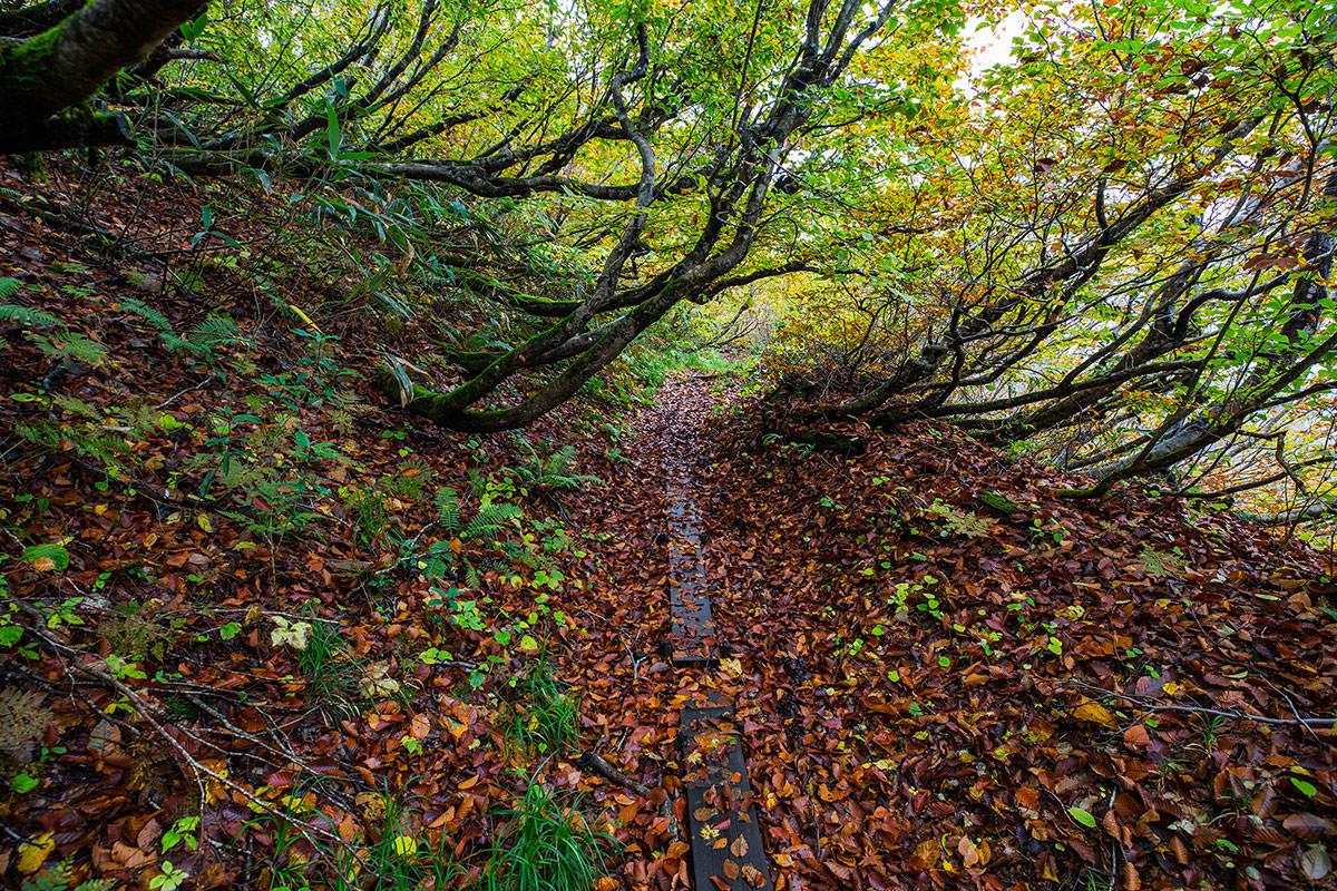 【鍋倉山】登山百景-落ち葉の下はぬかるむ