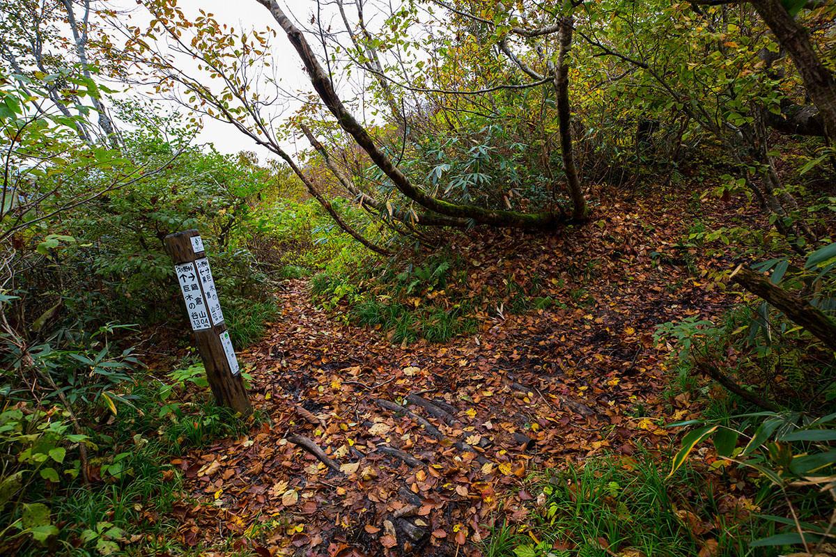 【鍋倉山】登山百景-鍋倉山と巨木の谷の分岐