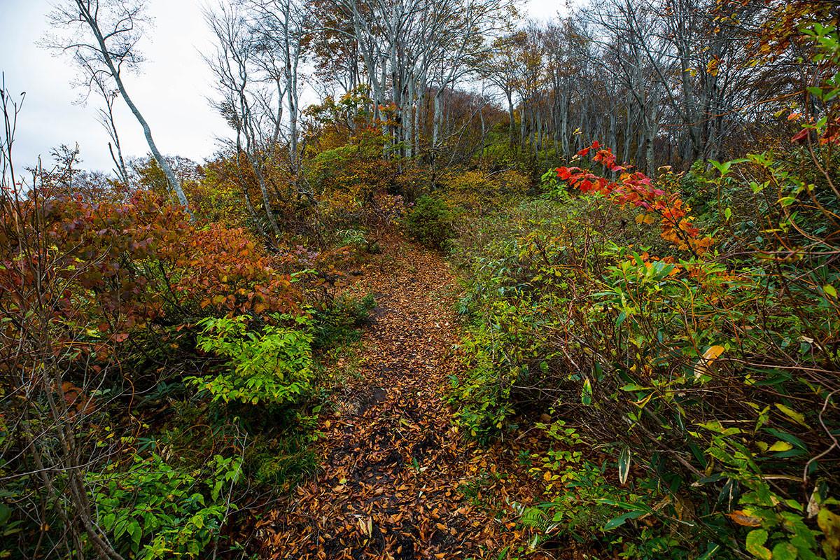 【鍋倉山】登山百景-鍋倉山への登り