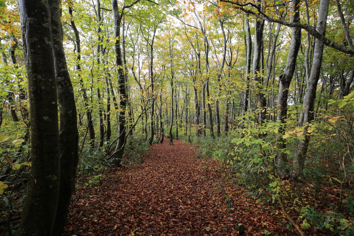 登山道に続く落ち葉