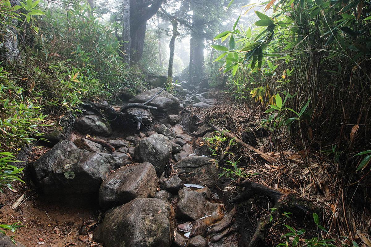 【苗場山】登山百景-歩きづらい