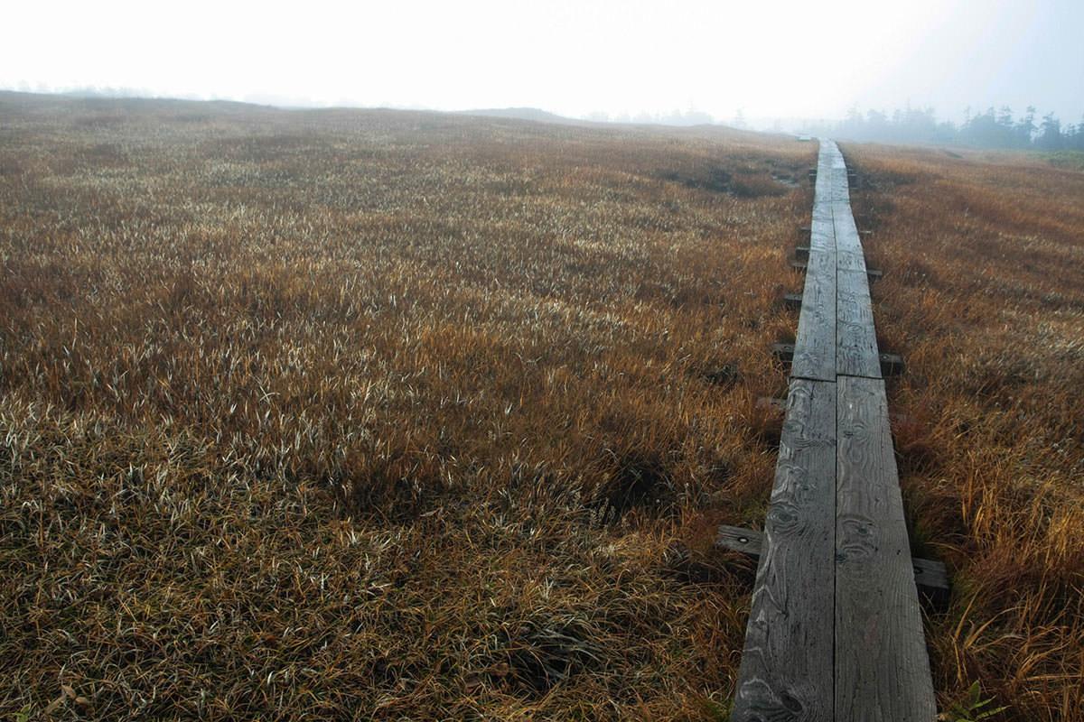 【苗場山】登山百景-湿原に出た