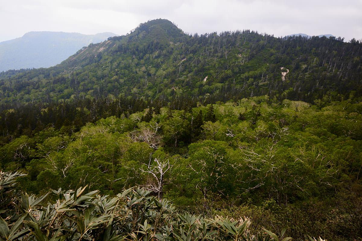 苗場山-緑が多い