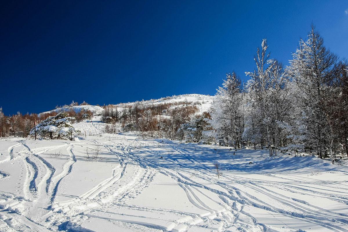 【根子岳 峰の原高原コース】登山百景-霧氷が見え始める