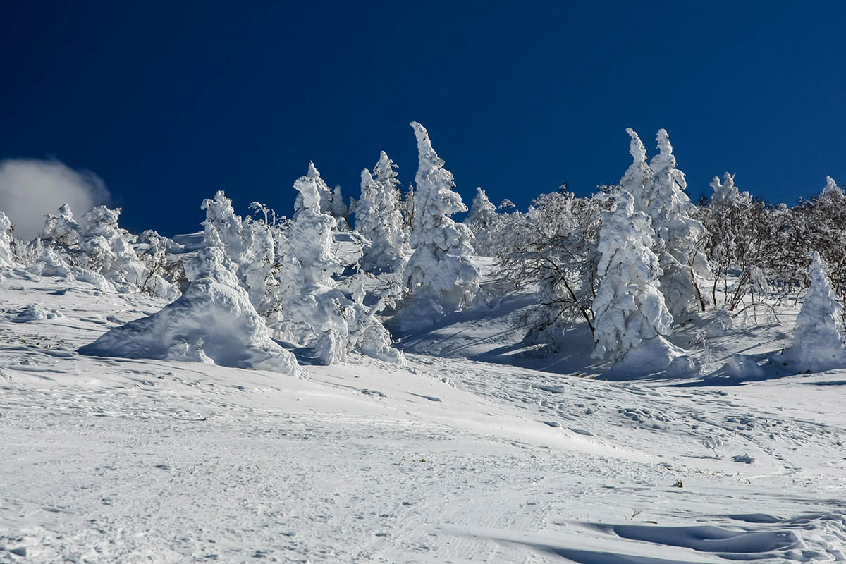 【根子岳 峰の原高原コース】登山百景-徐々に樹氷が