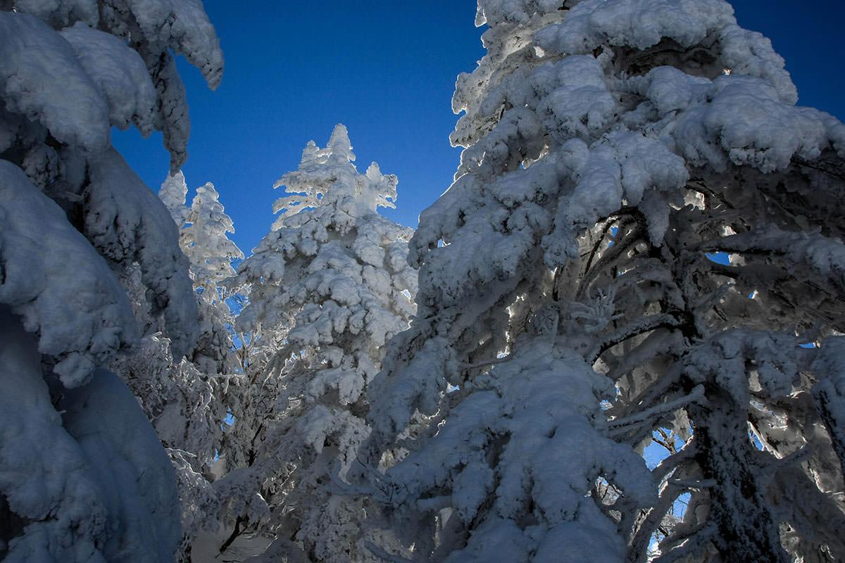 【根子岳 峰の原高原コース】登山百景-樹氷の中へ進む