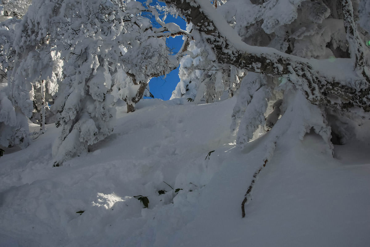 【根子岳 峰の原高原コース】登山百景-ふかふかで急な坂
