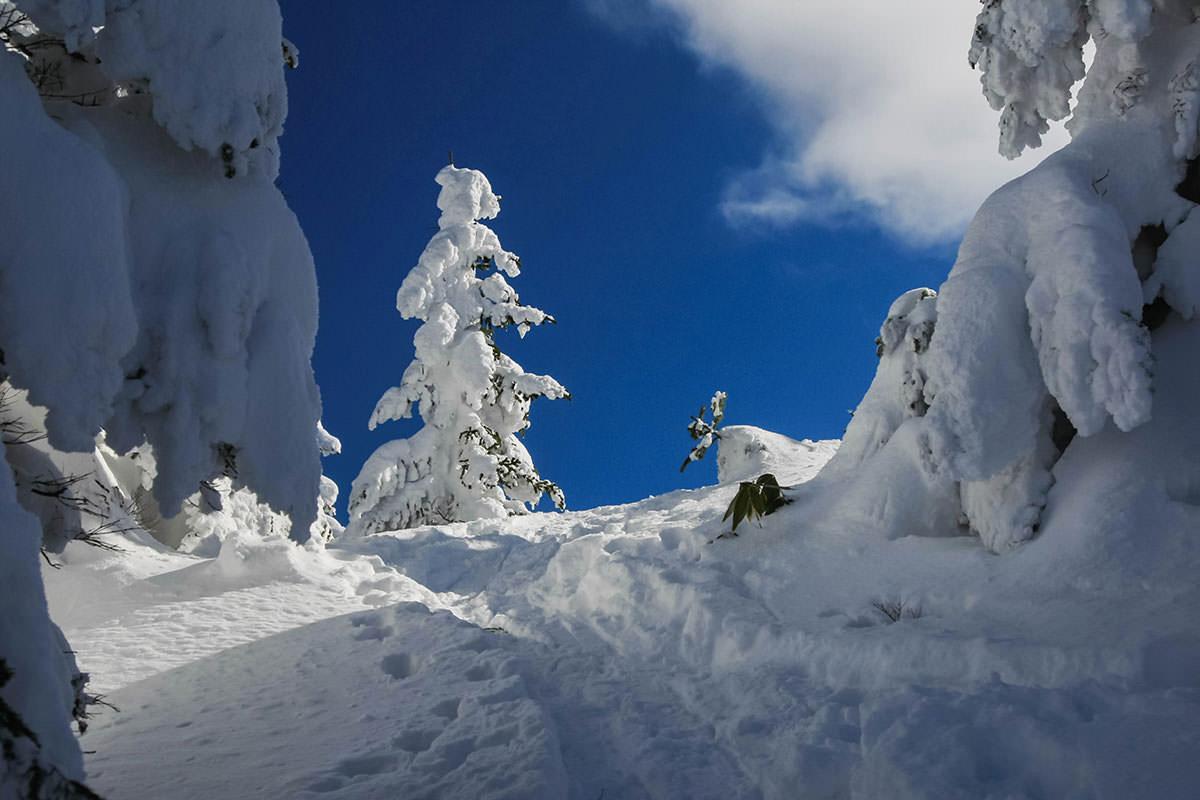【根子岳 峰の原高原コース】登山百景-樹氷の先に青空が見える