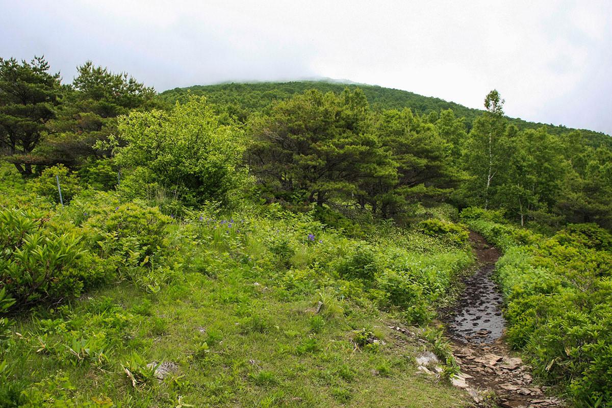 【根子岳】登山百景-東屋を過ぎると木に囲まれる