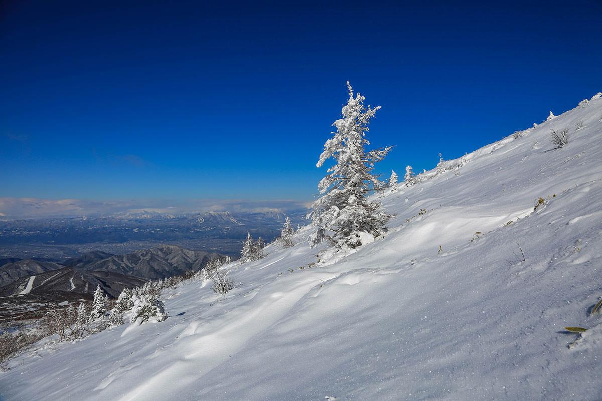 【根子岳 菅平高原】登山百景-木に雪が付いている