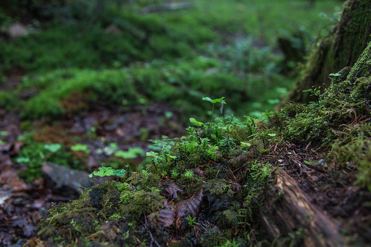 【にゅう】登山百景-入口から苔がビッシリ